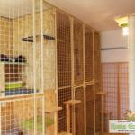 Hotel dla Kotów Kocie Gniazdko - wnętrze