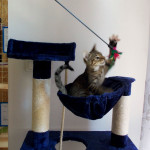 Młodsze kipiące energią kociaki mają u nas frajdę