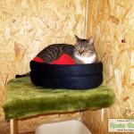 Hotel dla Kotów Kocie Gniazdko - Goście